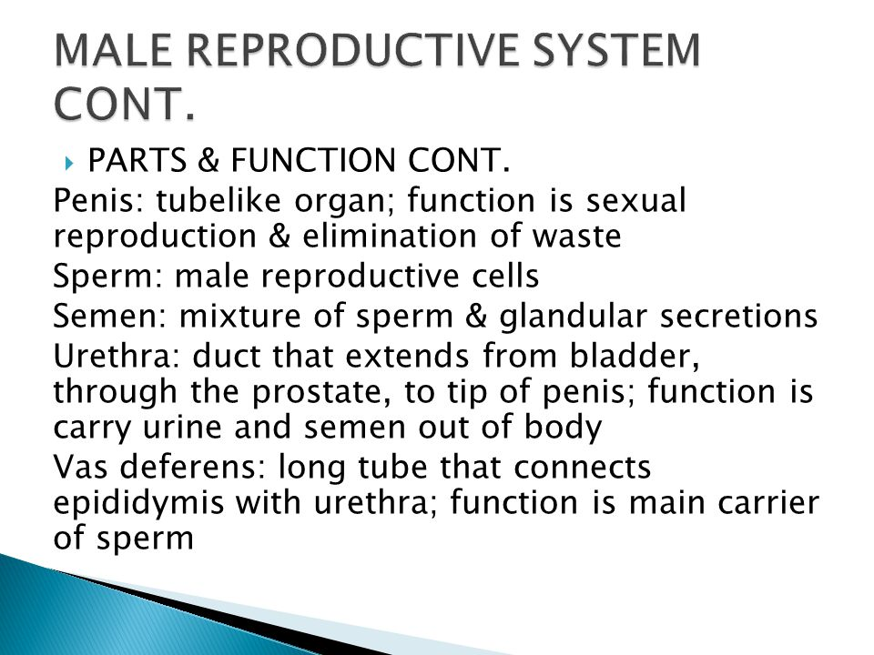 Male Female Reproductive Systems Ppt Video Online Download