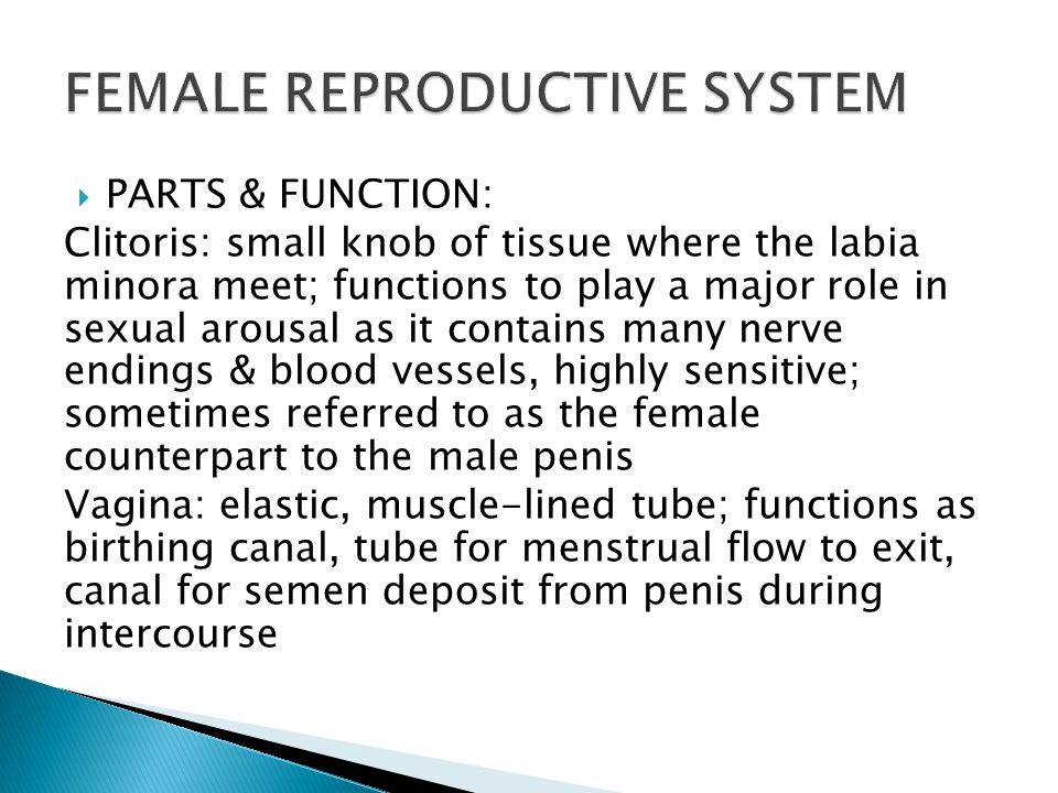 Function of the clitoris