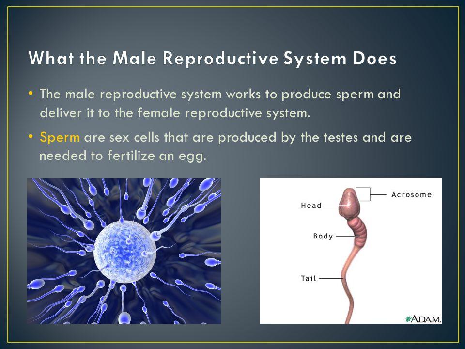 Sex cells structure