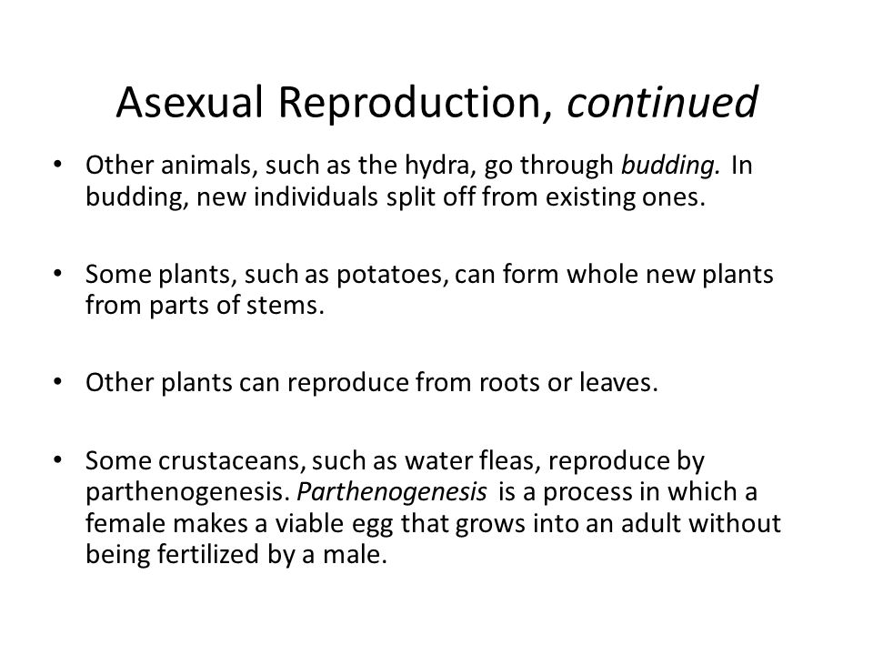Water fleas asexual reproduction worksheets