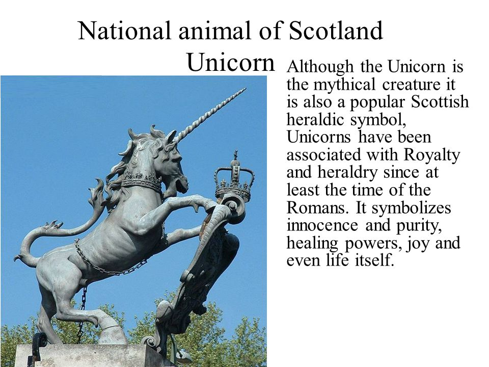 scotland national animal