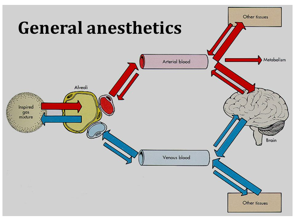 General anesthetics Introduction & History - ppt download