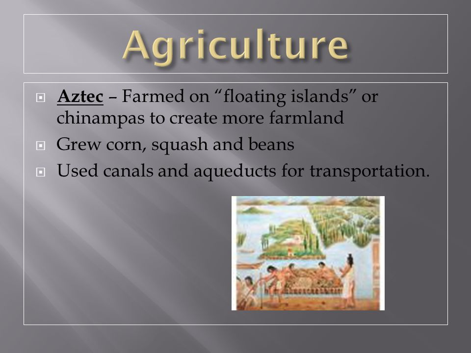 Agriculture Aztec – Farmed on floating islands or chinampas to create more farmland. Grew corn, squash and beans.