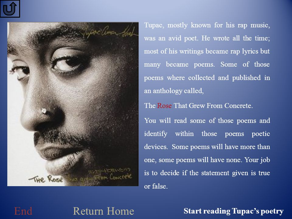 The Rose That Grew From Concrete - ppt video online download