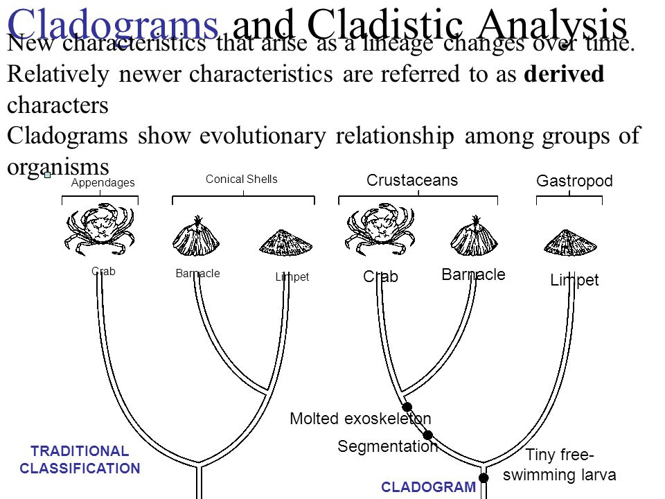 Cladograms and Cladistic Analysis