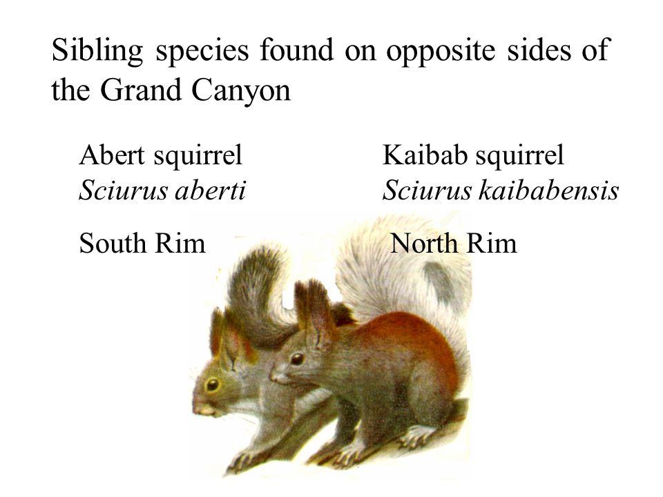 sibling species example
