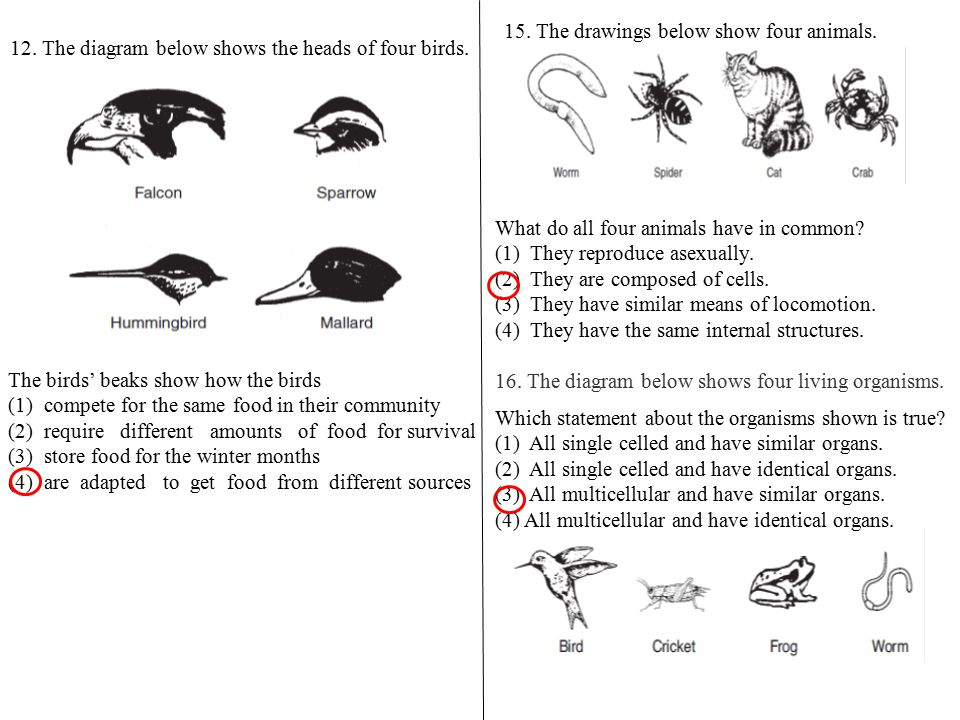 Fish Are Very Interesting Creatures The Diagram Below Shows All The