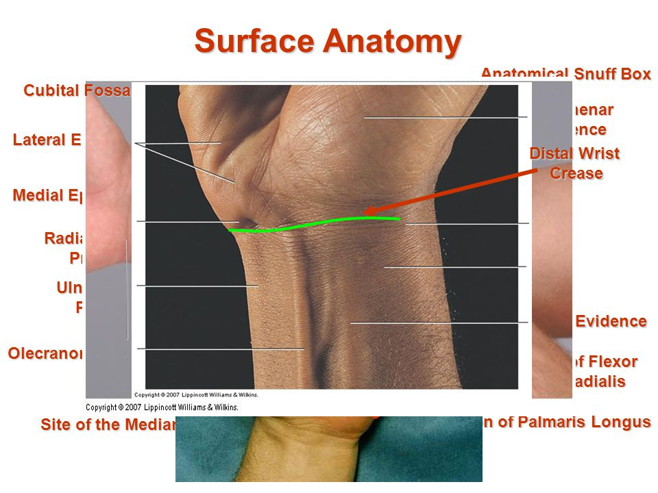 Elbow (HumeroUlnar) Joint and Hand - ppt video online download