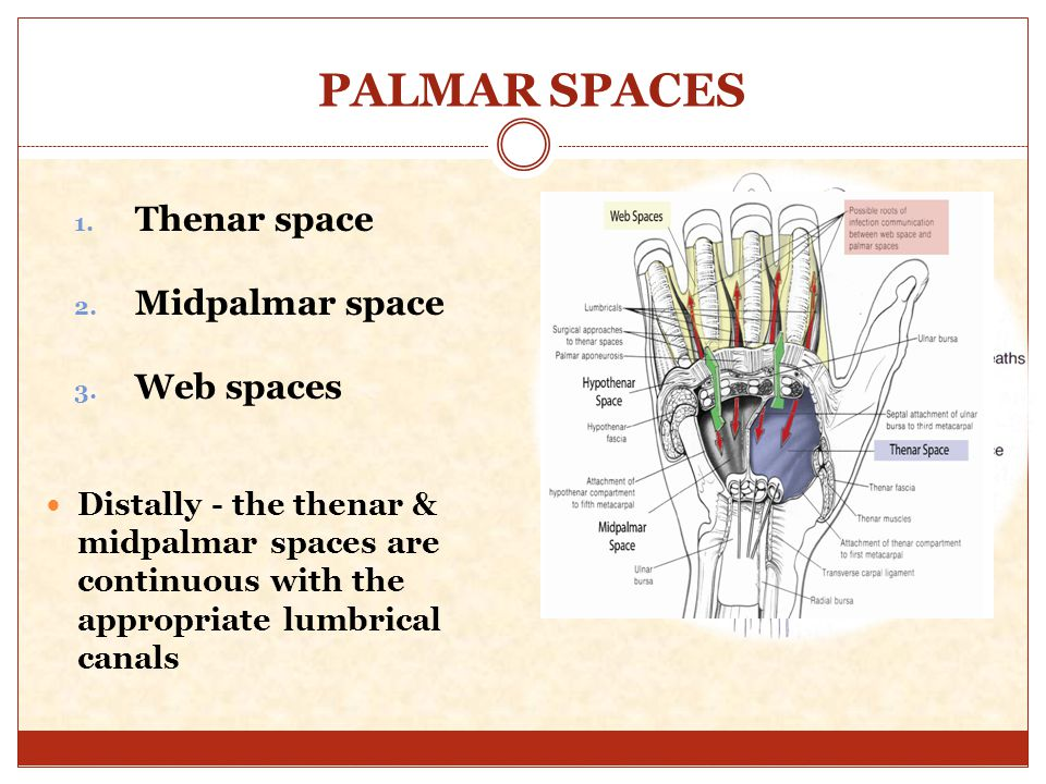deep palmar space infection - 960×720