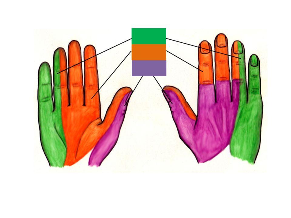 Hand Anatomy Ppt Video Online Download