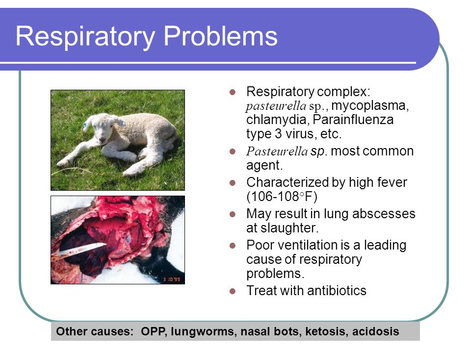 Common Problems and Solutions - ppt download
