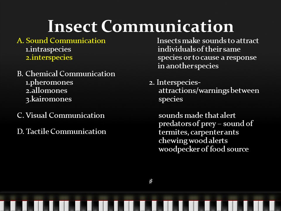 Insect Communication A  Sound Communication 1 intraspecies 2