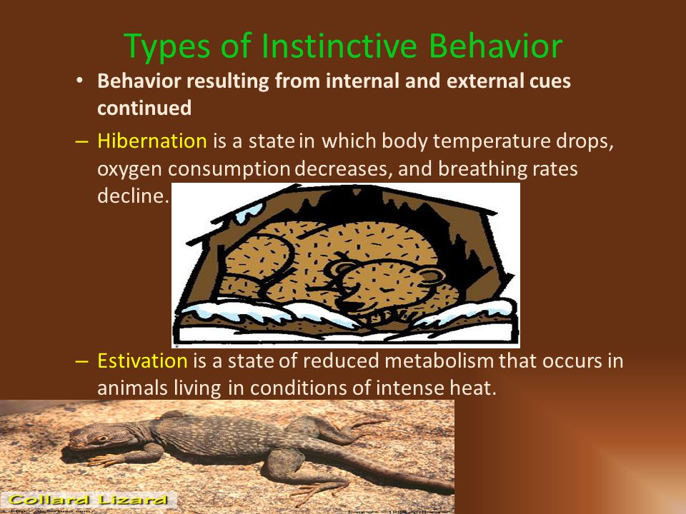 Types of Instinctive Behavior