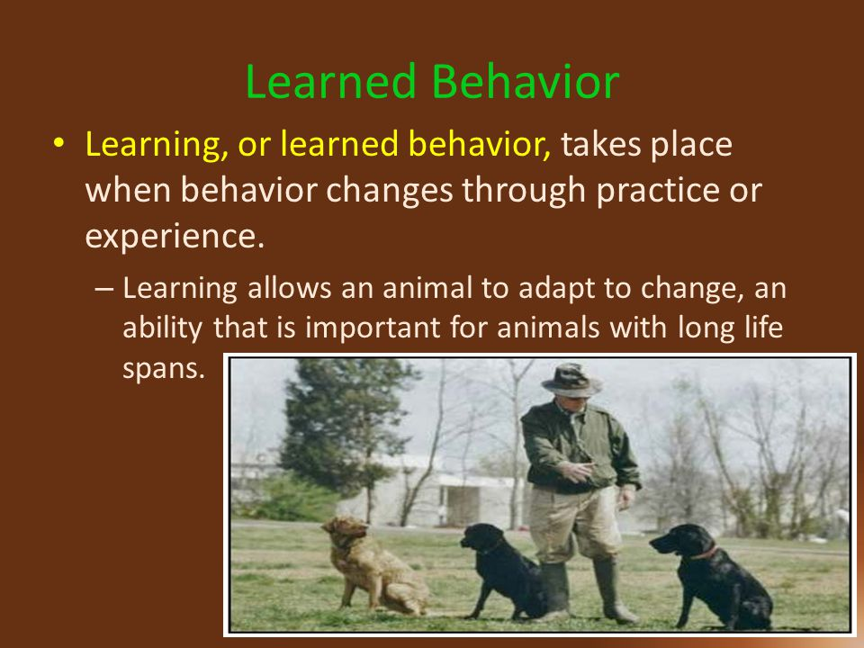 Learned Behavior Learning, or learned behavior, takes place when behavior changes through practice or experience.