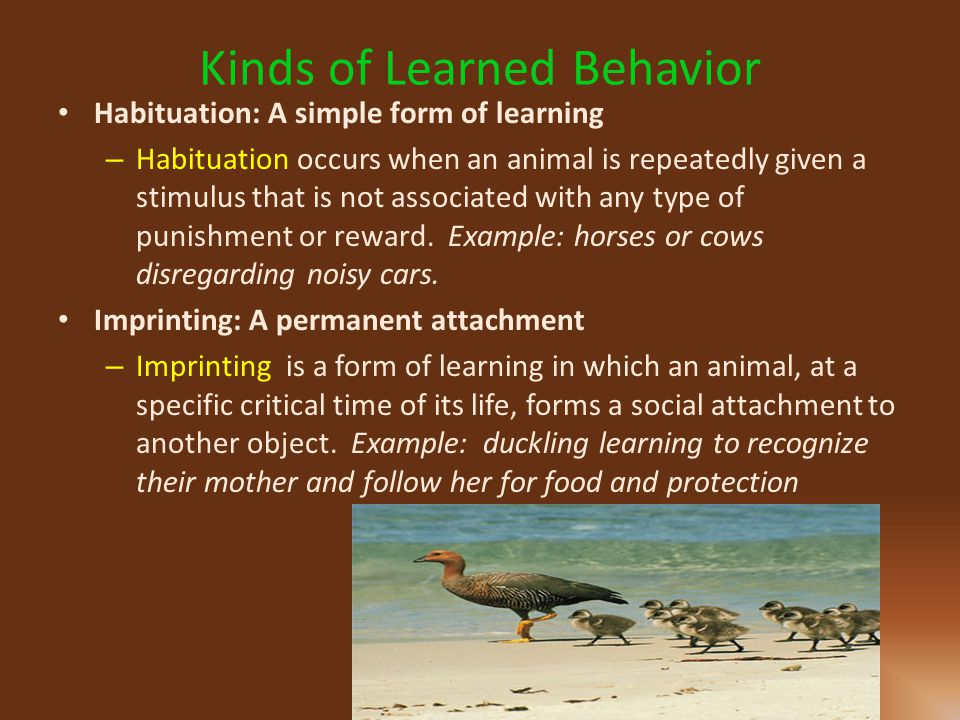 Kinds of Learned Behavior