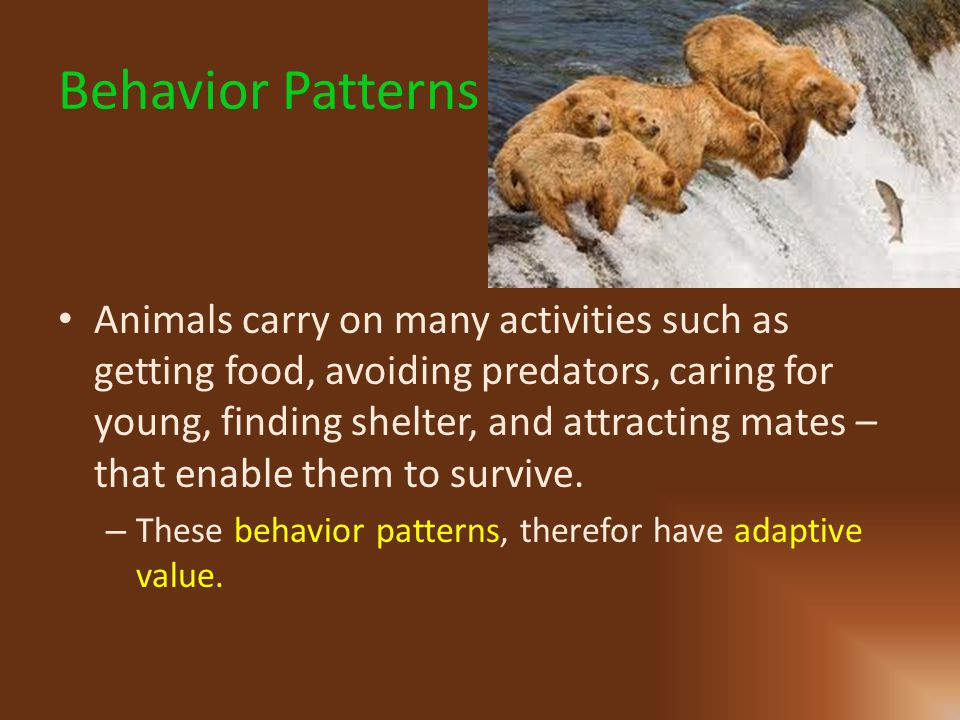 Behavior Patterns