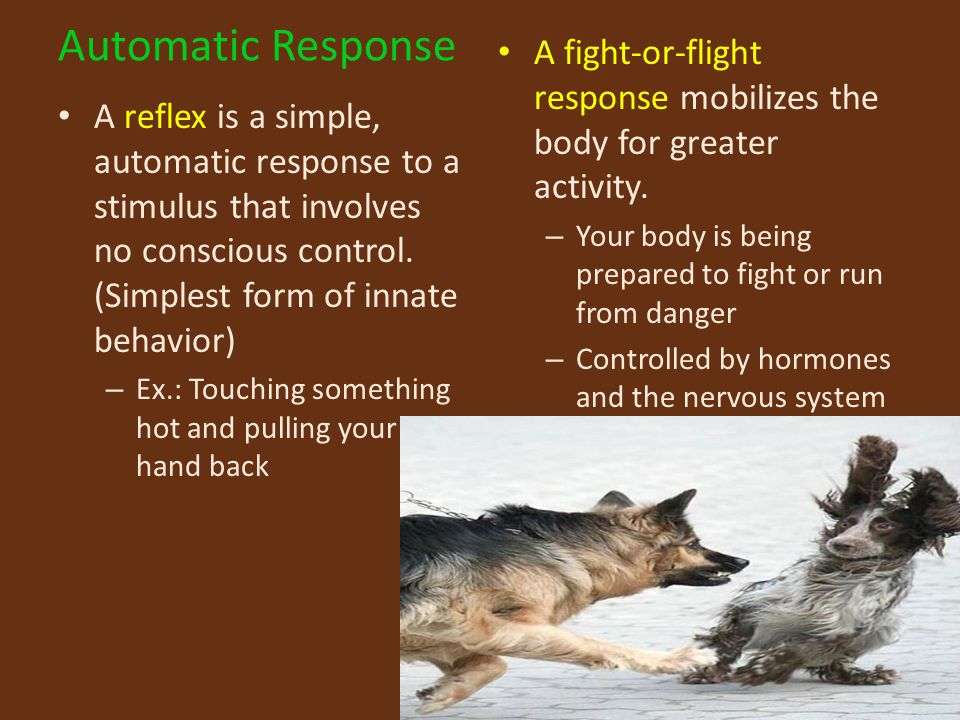 Automatic Response A fight-or-flight response mobilizes the body for greater activity. Your body is being prepared to fight or run from danger.