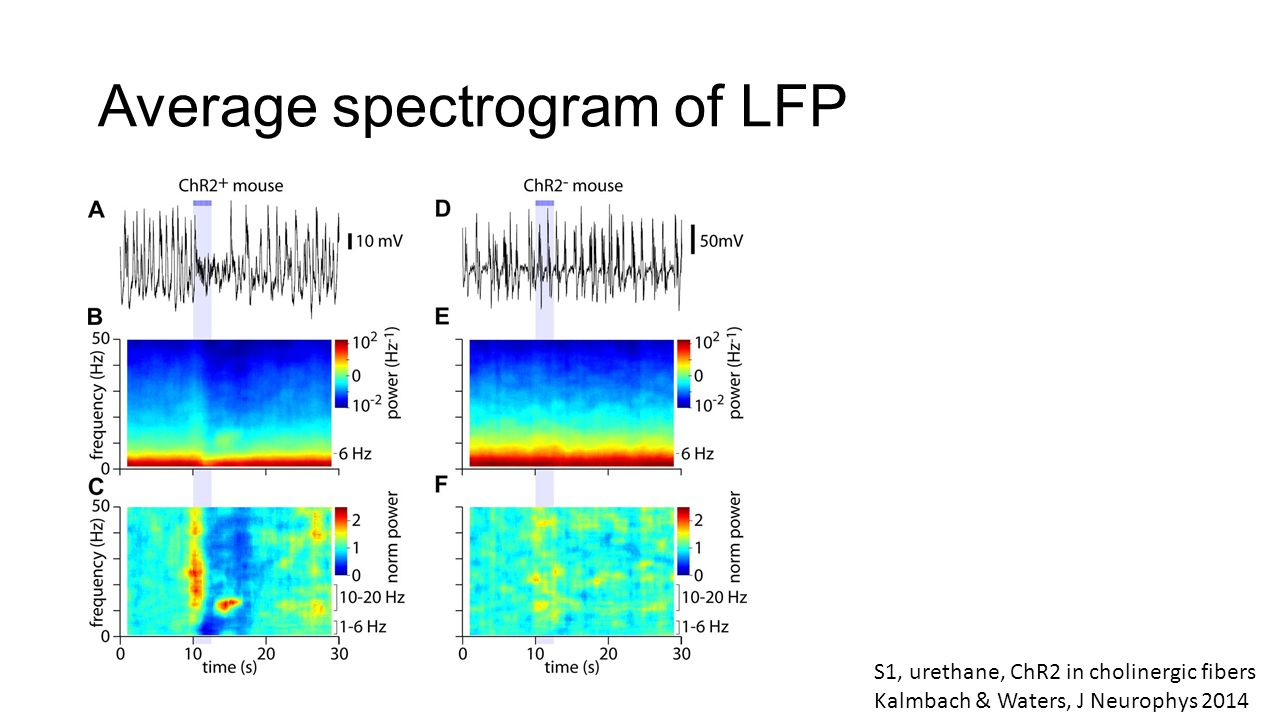 5  Spectrograms and non-stationary signals - ppt video