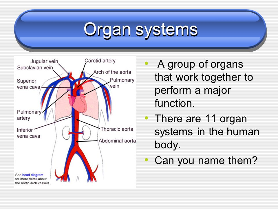 how two body systems interrelate to perform named functions essay An organ system is a group of organs that work together to perform major functions or meet physiological needs of the body this book covers eleven distinct organ systems in the human body ( figure 2 and figure 3 .