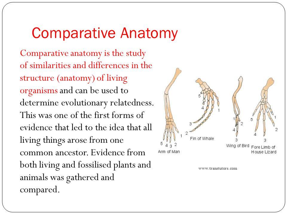 Vistoso Evidence Of Evolution Comparative Anatomy Componente ...