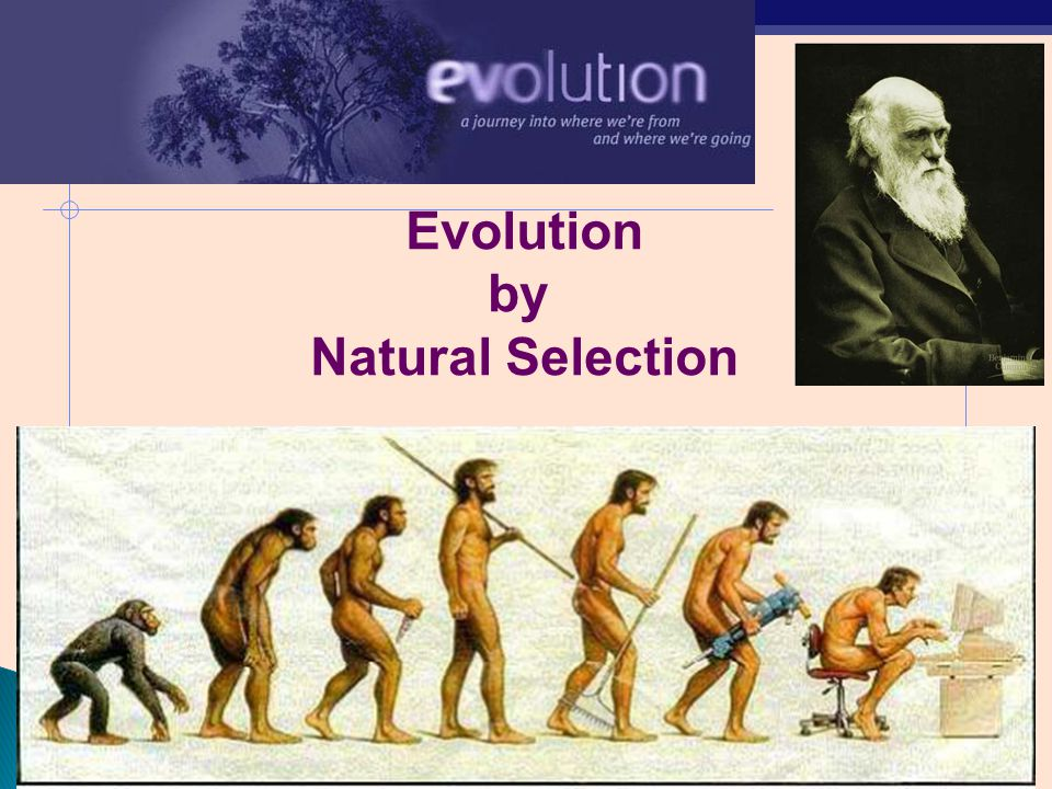 Charles Darwin S Thoery Of Evolution And Natural Selection