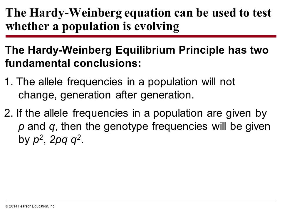 Hardy weinberg equilibrium 5 rules for dating