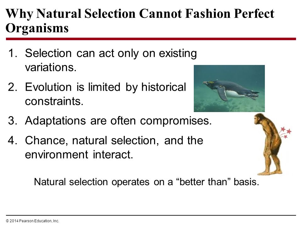 Natural Selection Cannot Fashion Perfect Organisms