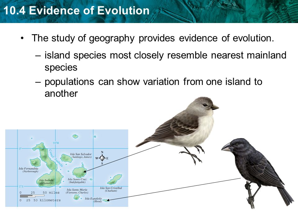 Ngsss Sc912l151 Explain How The Scientific Theory Of Evolution