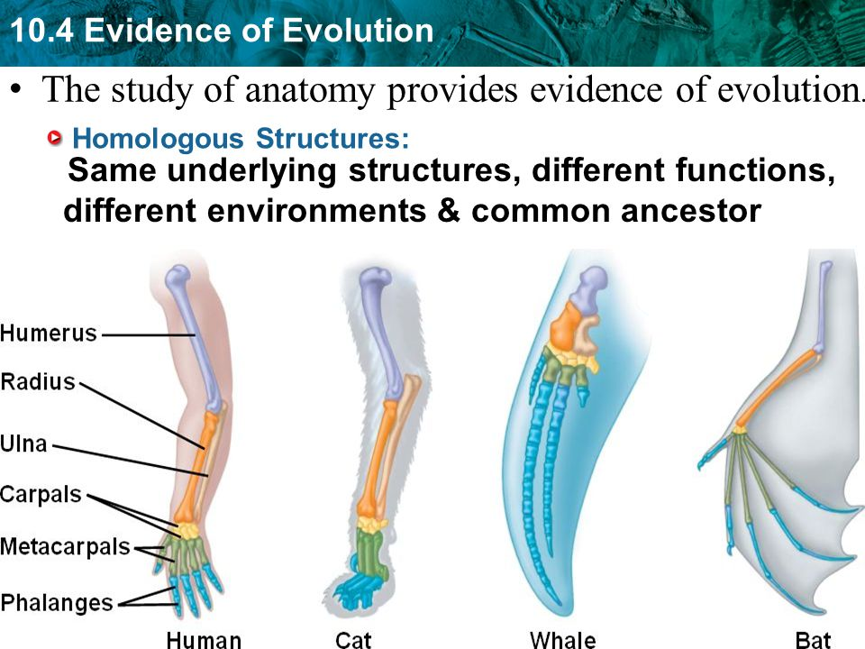 NGSSS SC.912.L.15.1* Explain how the scientific theory of evolution ...