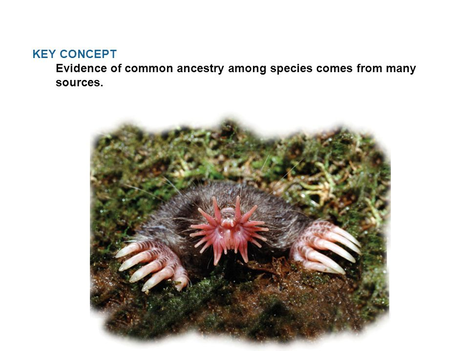 KEY CONCEPT Evidence of common ancestry among species comes from many sources.