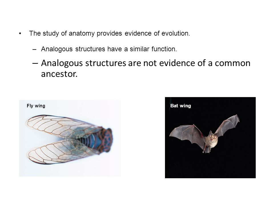 Analogous structures are not evidence of a common ancestor.