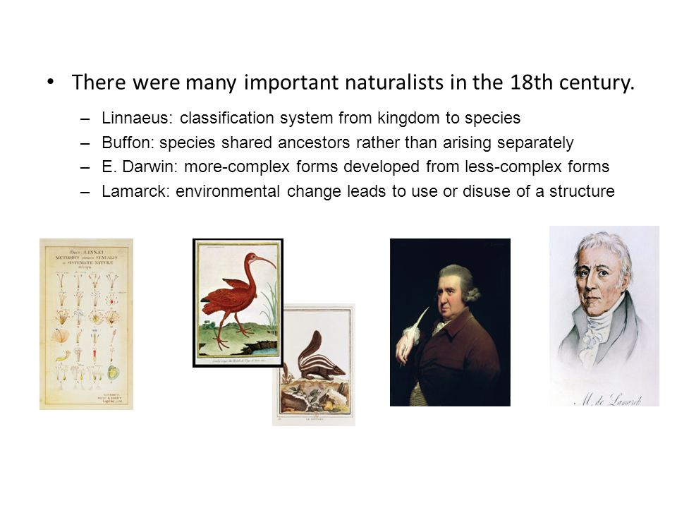 There were many important naturalists in the 18th century.