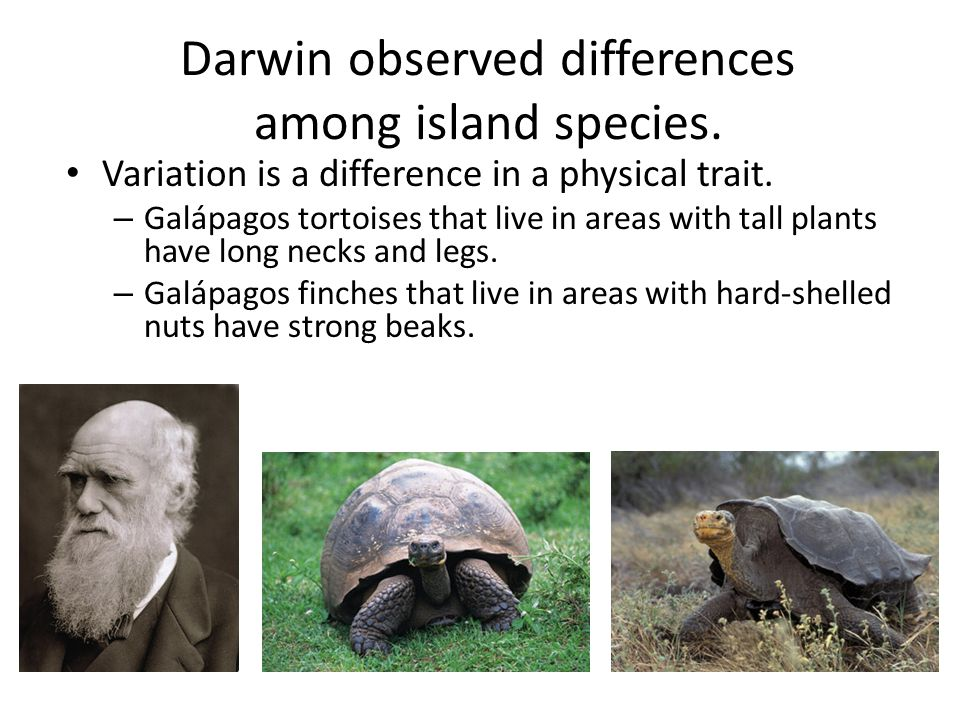 Darwin observed differences among island species.