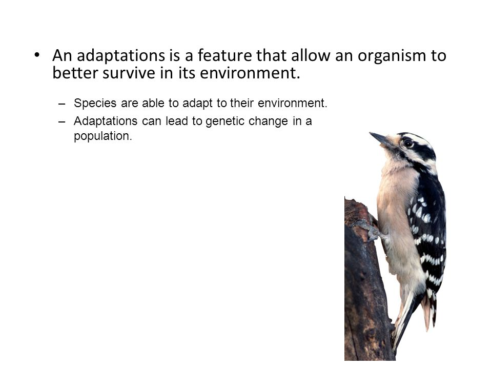 An adaptations is a feature that allow an organism to better survive in its environment.
