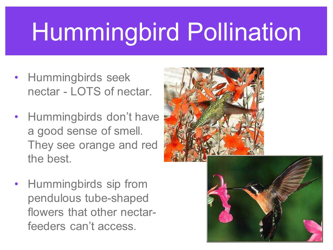 Pollination and Dispersal - ppt download