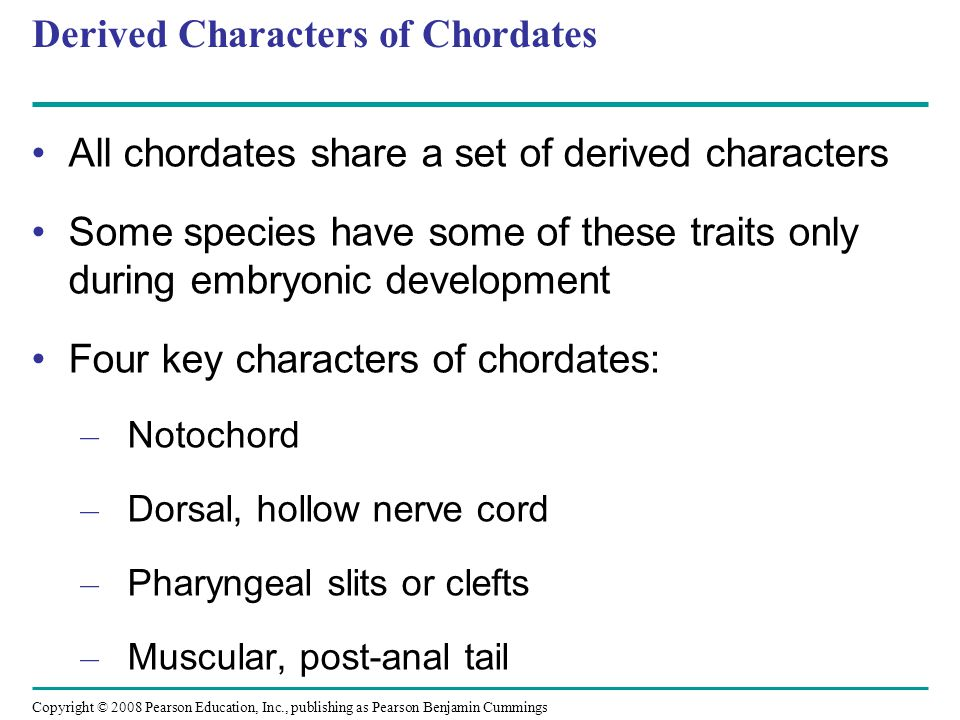 which is a shared characteristic of all chordates