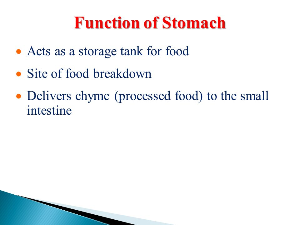 Function of Stomach Acts as a storage tank for food