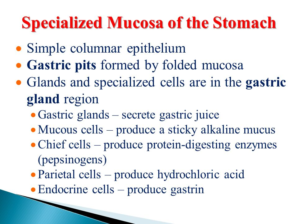 Specialized Mucosa of the Stomach