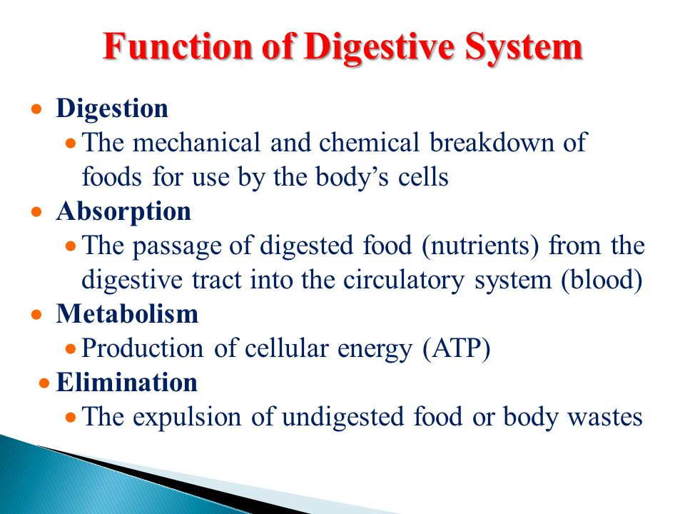 Function of Digestive System