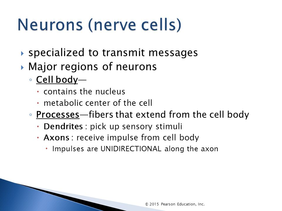 Neurons (nerve cells) specialized to transmit messages