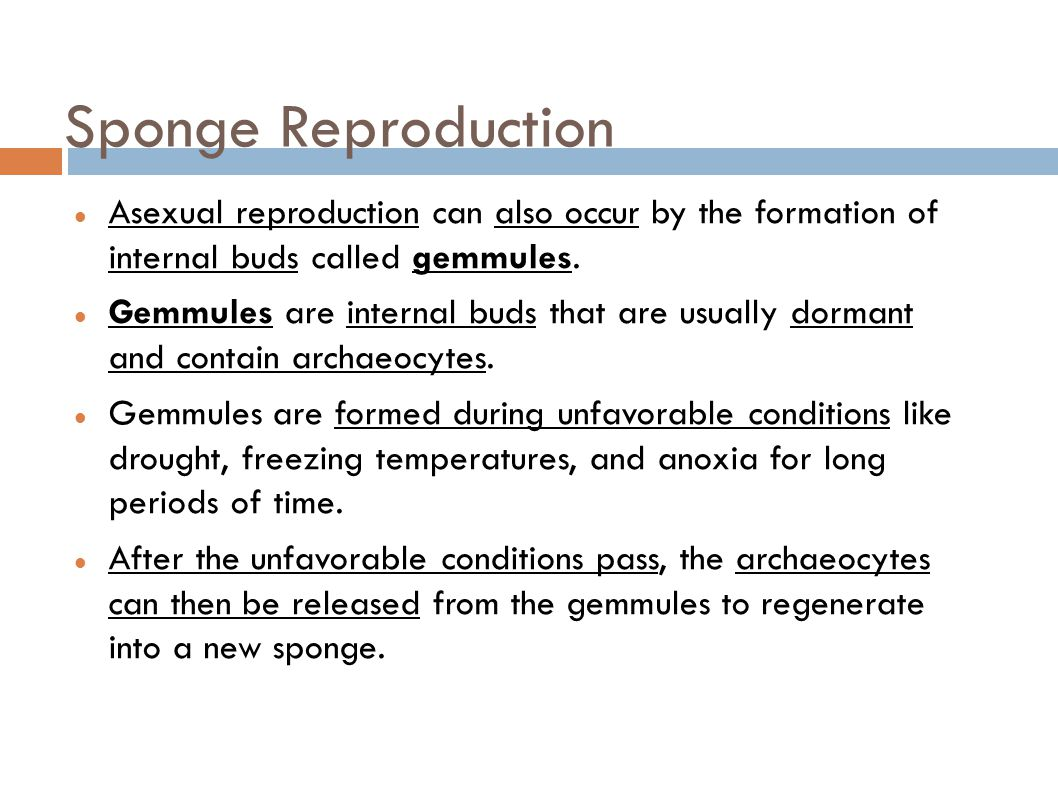 Gemmule formation asexual reproduction examples
