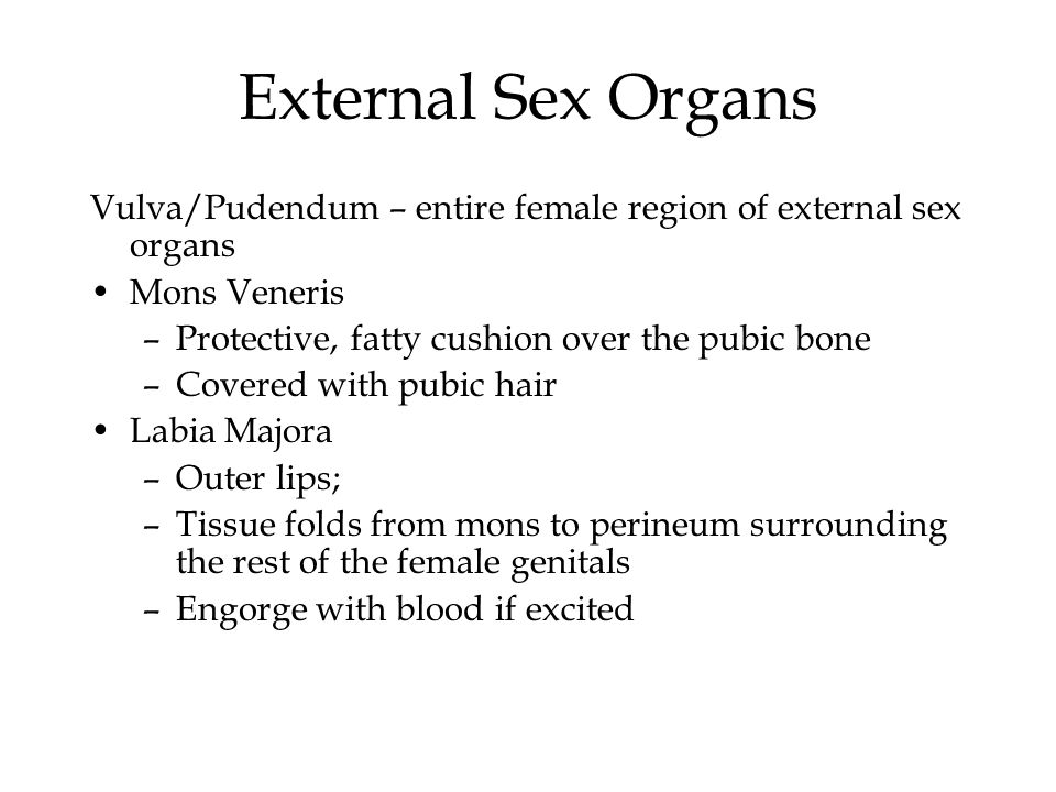 Chapter 3 Female Sexual Anatomy And Physiology Ppt Video Online