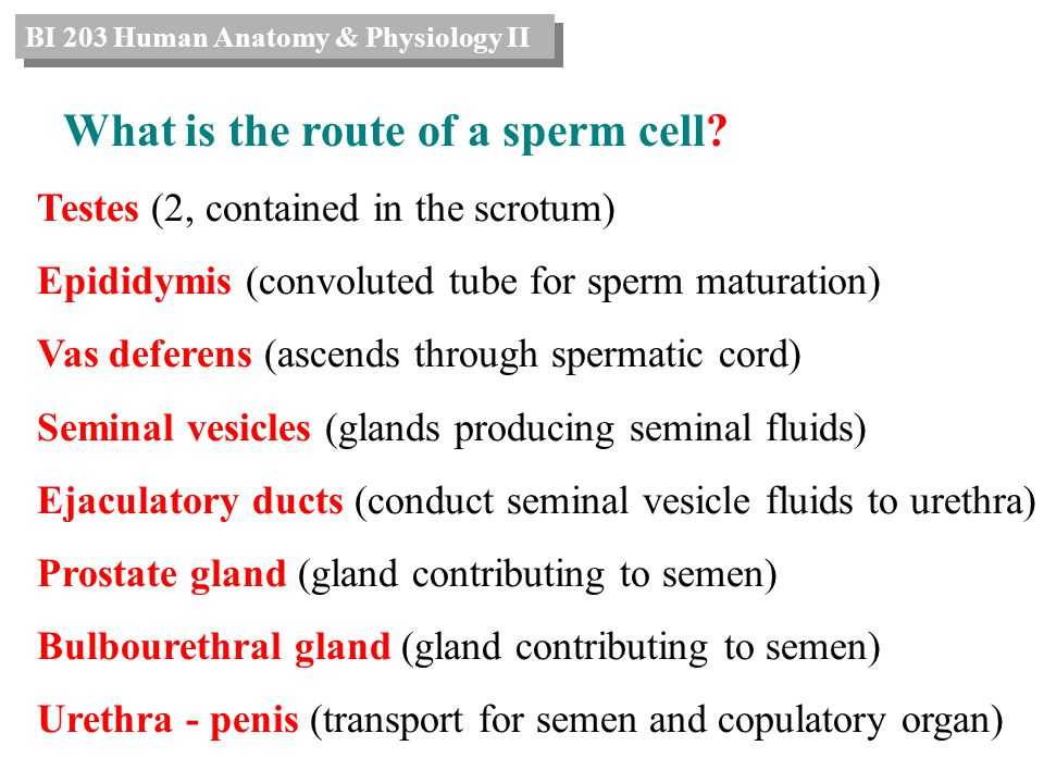 Why do we have reproductive systems? - ppt video online download