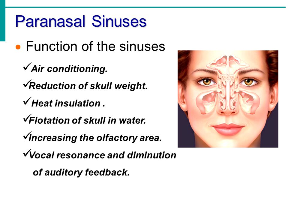 Paranasal Sinuses Function of the sinuses Air conditioning.