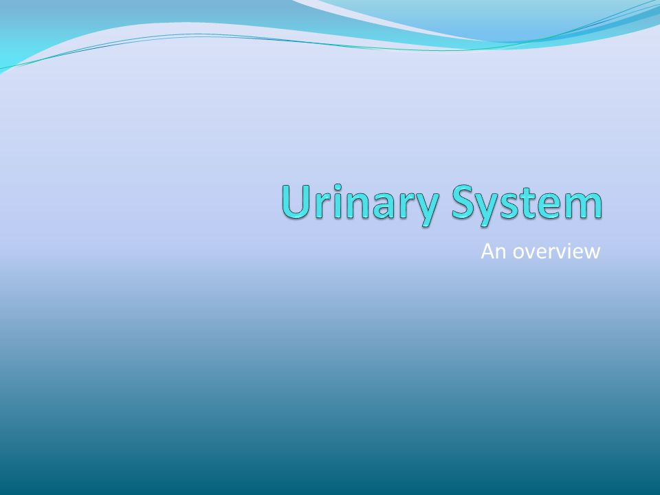 Urinary System An overview