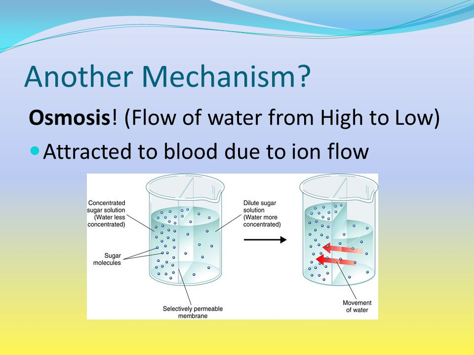 Another Mechanism Osmosis! (Flow of water from High to Low)