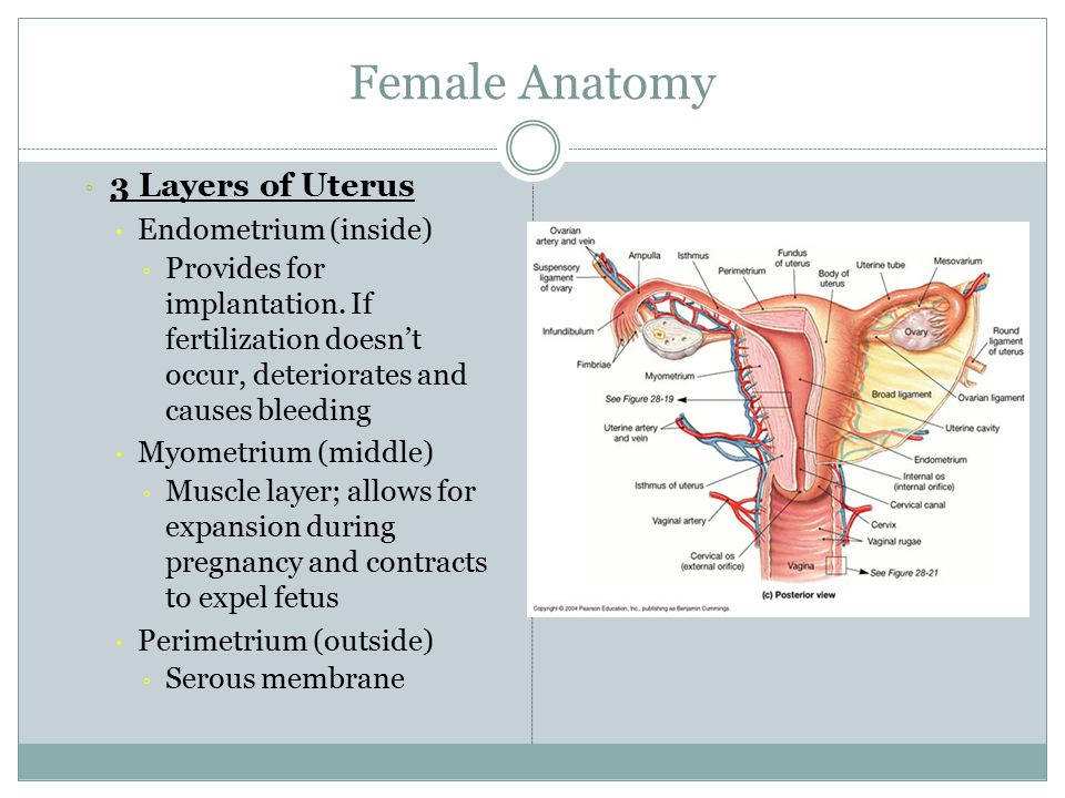REPRODUCTIVE SYSTEM. - ppt video online download