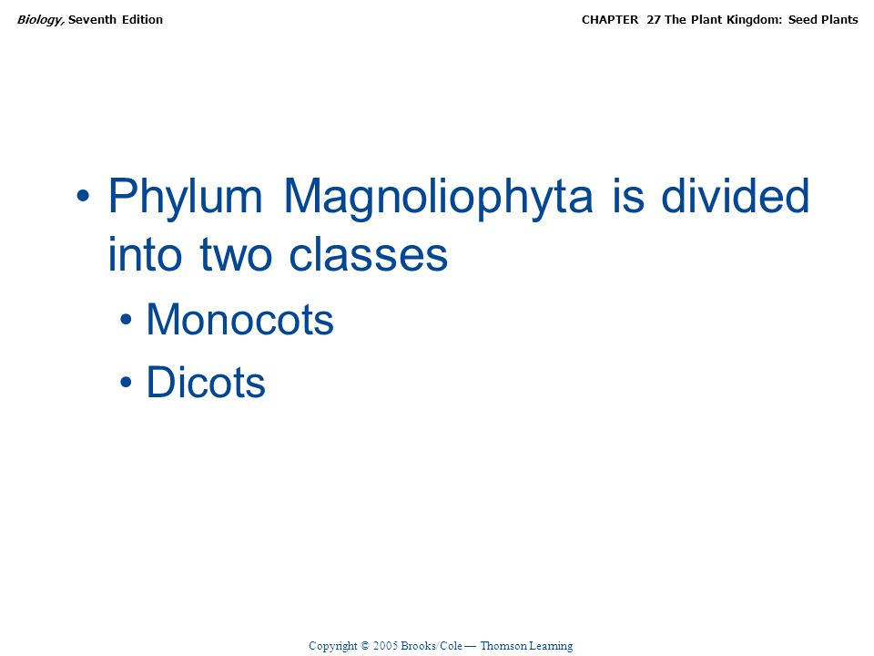 Phylum Magnoliophyta is divided into two classes