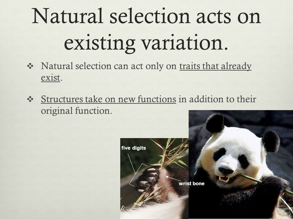 Natural selection acts on existing variation.