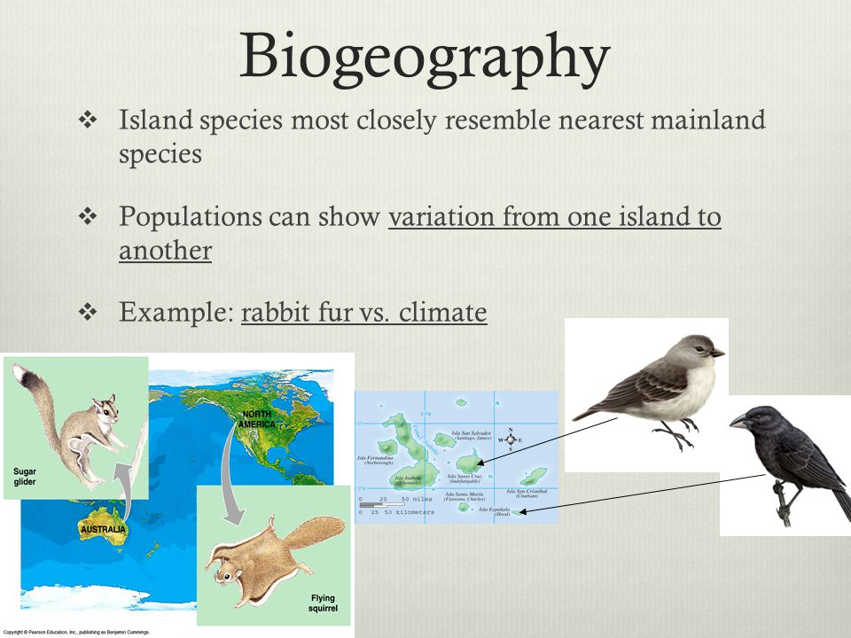 Biogeography Island species most closely resemble nearest mainland species. Populations can show variation from one island to another.